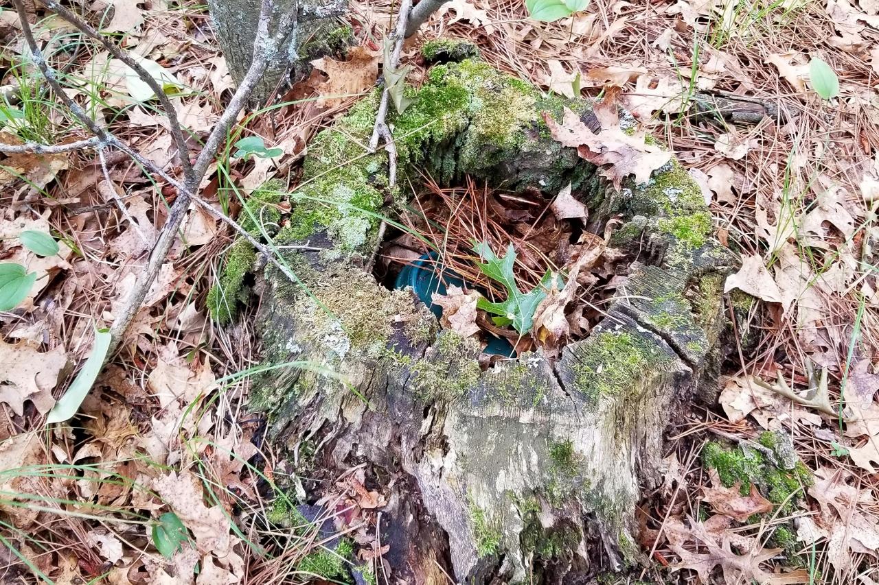 geocache hidden in stump