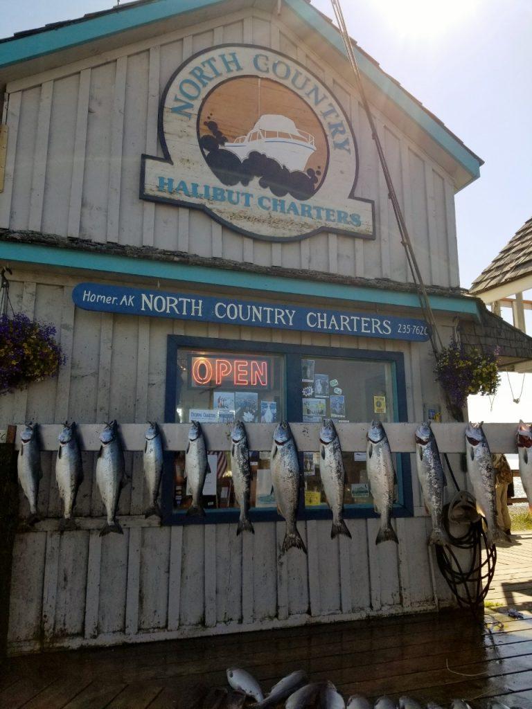 Salmon fishing in Homer Alaska