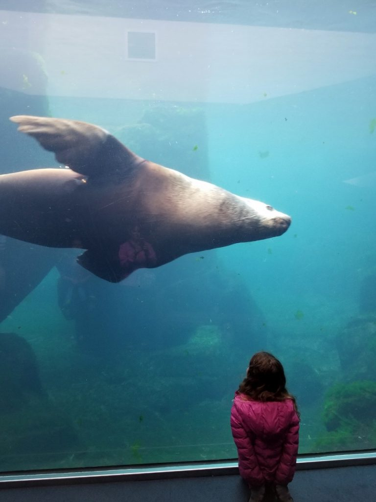 Homer Sealife Center in Alaska with kids