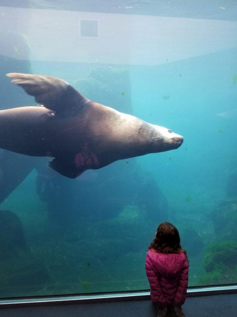 Homer Sealife Center in Alaska with kids