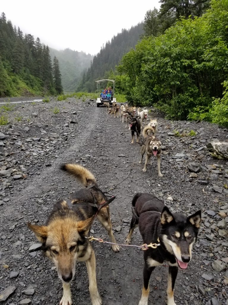 Fun Things to do with kids in alaska dog sledding
