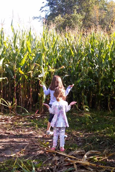fall activities for family fun corn maze