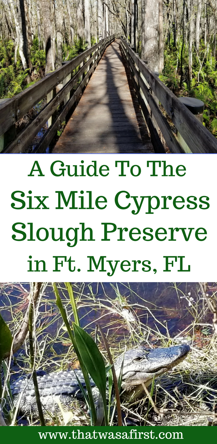 If your family is visiting Southwest Florida, you must spend a few hours at the Six Mile Cypress Slough Preserve in Ft. Myers. #Florida