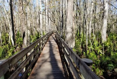 The boardwalk at the Six Mile Cypress Slough Preserve