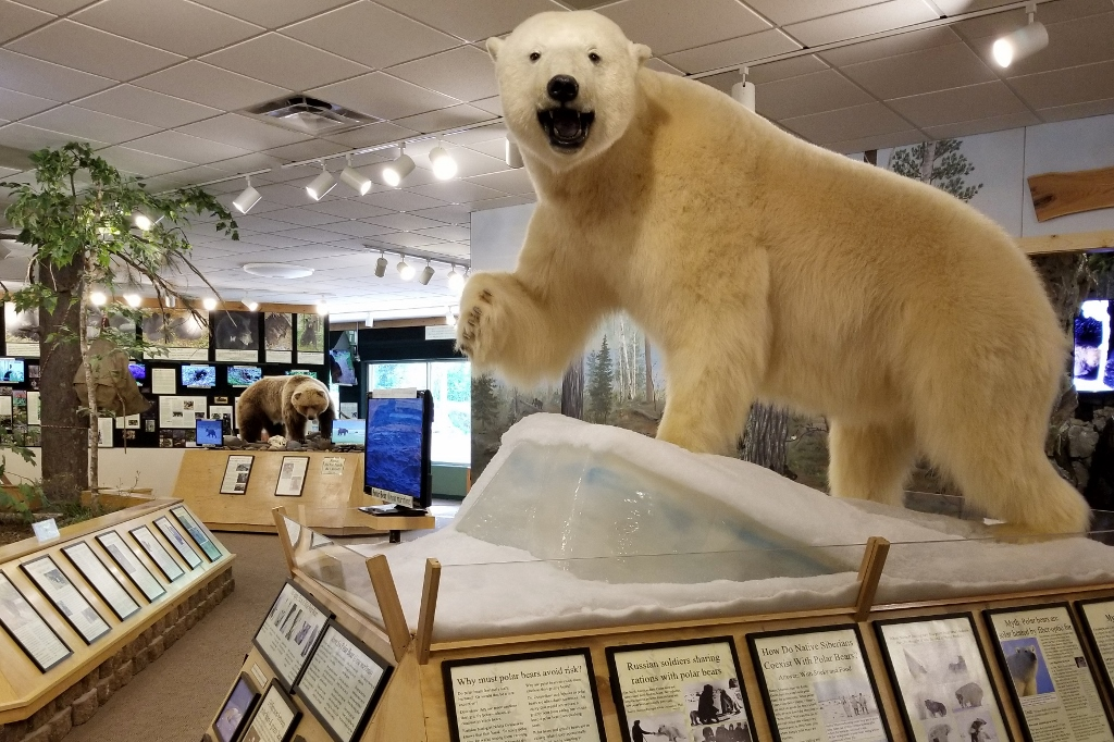 things to do in Ely north american bear center