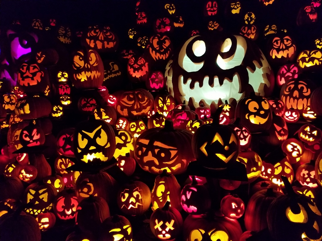 Minnesota Zoo pumpkins