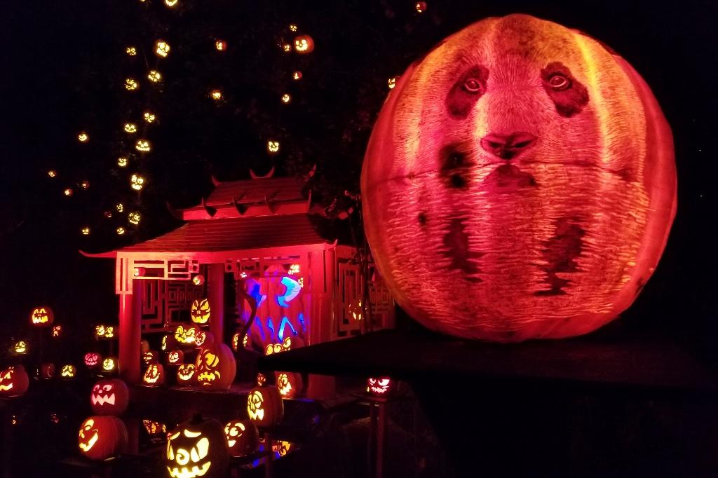 Minnesota Zoo Jack o Lantern Spectacular