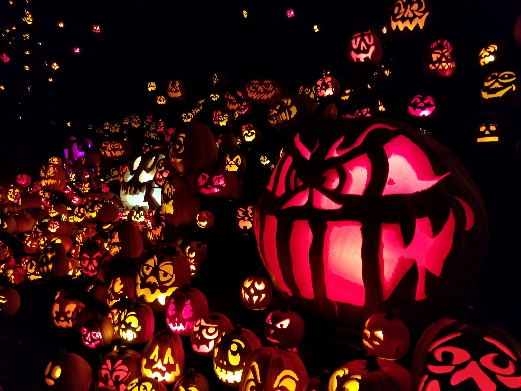jack o lantern spectacular at mN zoo